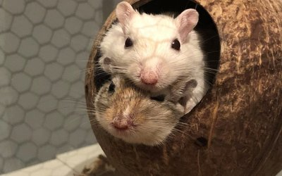 Mäuse als Haustiere?!